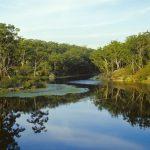 Parramatta Lake Picnic
